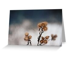 Dry Thistle Greeting Card