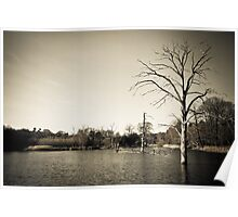 Old Trees in Lake Landscape Poster