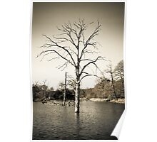 Old Tree in Lake Poster