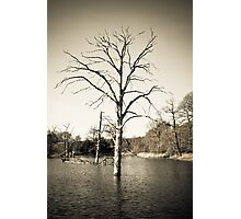 Old Tree in Lake Photographic Print