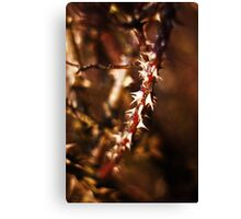 Spikes Canvas Print