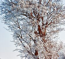 Tree Full of Snow by Vicki Field