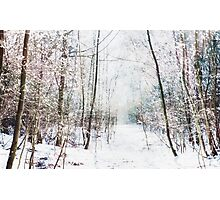 Winter Wonder Woodland Photographic Print