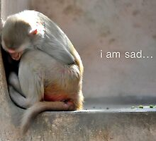 I am sad.... by Saif Zahid