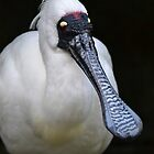 Royal Spoonbill by Deborah Clearwater
