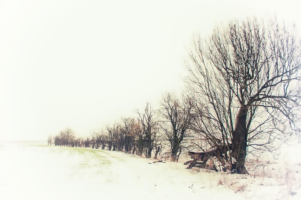 A Snowy Line Up by Vicki Field