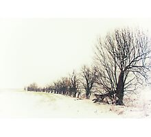 A Snowy Line Up Photographic Print