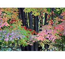 Painting trees Photographic Print