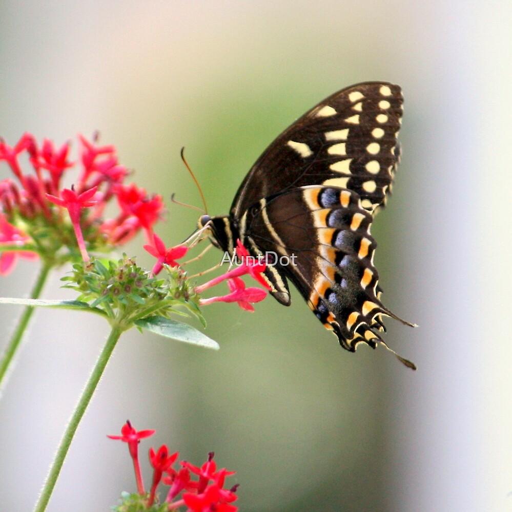 Swallowtail Butterfly by AuntDot