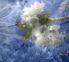 Sakura by Greta  McLaughlin