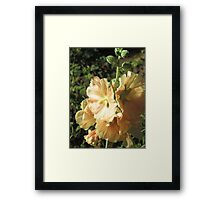 Peach Hollyhock Framed Print