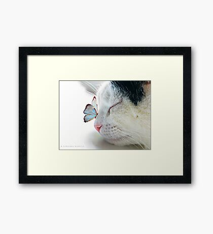 BUTTERFLY SAT ON A SLEEPING CAT NOSE  Framed Print