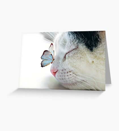BUTTERFLY SAT ON A SLEEPING CAT NOSE  Greeting Card