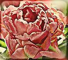 Pink Tulip by KatarinaD