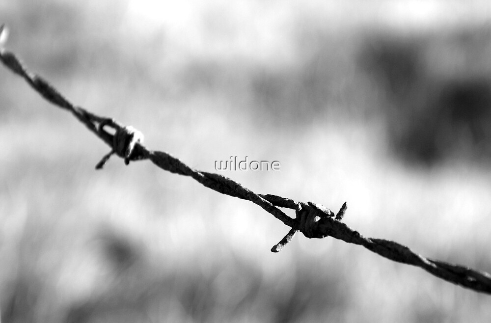 Barbed wire by wildone