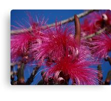 Nature And Colours - Madre Naturaleza Y Colores Canvas Print