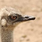 Portrait of an  ostrich by Laura Melis
