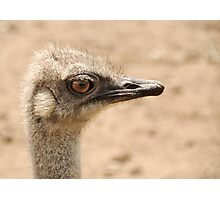 Portrait of an  ostrich Photographic Print