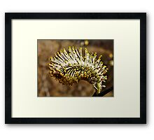 Willow Pussy Framed Print