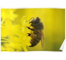 Honey  Poster