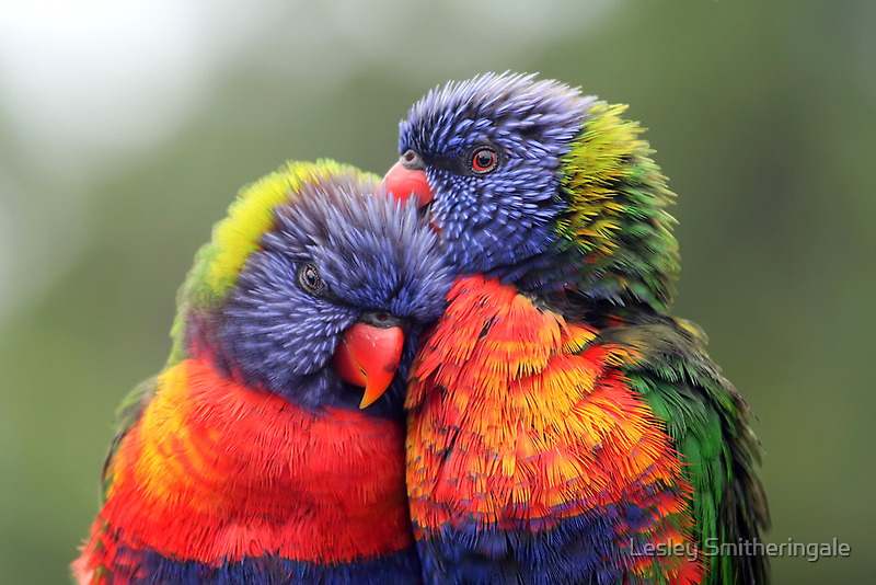 Canoodling in the Mist by Lesley Smitheringale