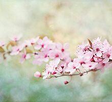 Spring Reverie by Jacky Parker