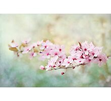 Spring Reverie Photographic Print