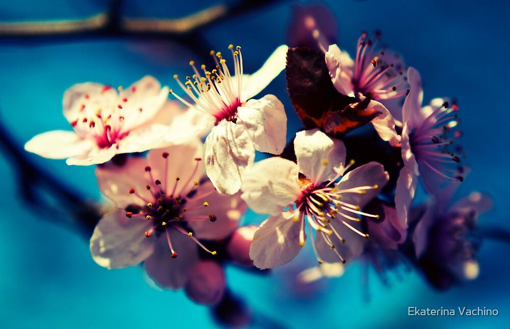 Colorful blossom by EkaterinaLa
