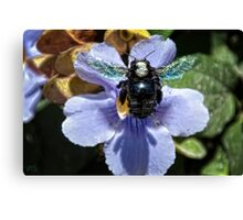 BOB ~ Big Ol' Bee Canvas Print