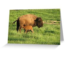 Spring Calf Greeting Card
