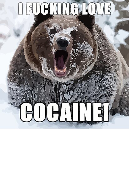 Bear Meme by 305movingart