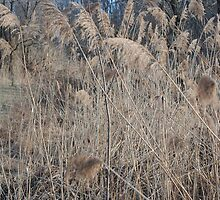 Wetlands in Winter by Gordon H Rohrbaugh Jr.