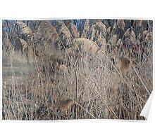 Wetlands in Winter Poster