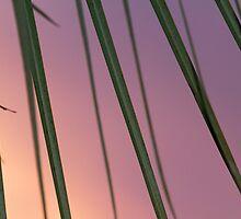 Lashes - Orlando, FL by Matthew Kocin