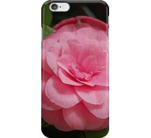 Camellia Shining Bright iPhone Case/Skin
