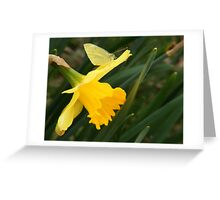 Butterfly & Daffodil  Greeting Card