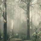 Shroud by Andrew Paranavitana
