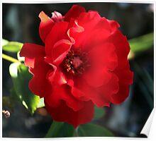 Olde Worlde Red Rose Poster
