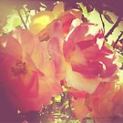 Faded Roses by TheSassyYank