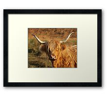 Harry Coo Framed Print