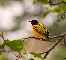 Village Weaver by HelenBeresford