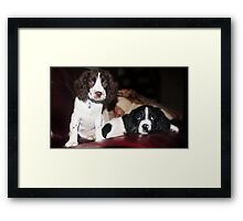 Benson and jess on sofa Framed Print