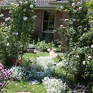 my rose garden arch   by lettie1957