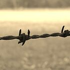 Barbed by Serenitas