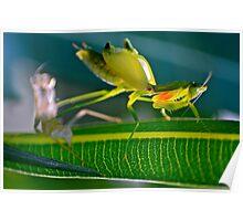 Praying Mantis 3. Poster