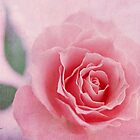 Heavenly Rose by Romanovna Fine Art Prints