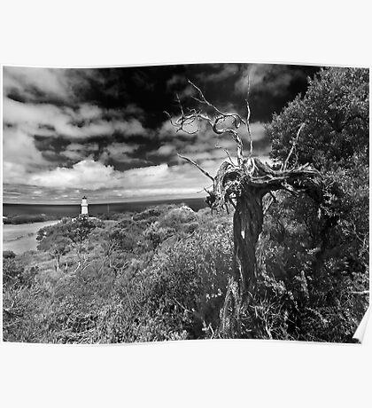 A view above Cape Schank Poster