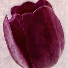 Painted Tulip by Romanovna Fine Art Prints