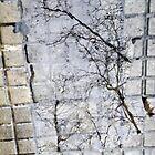 Urban Reflections by Sue Ballyn