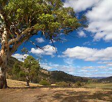 Farmscape - Elderslie, Tasmania by clickedbynic